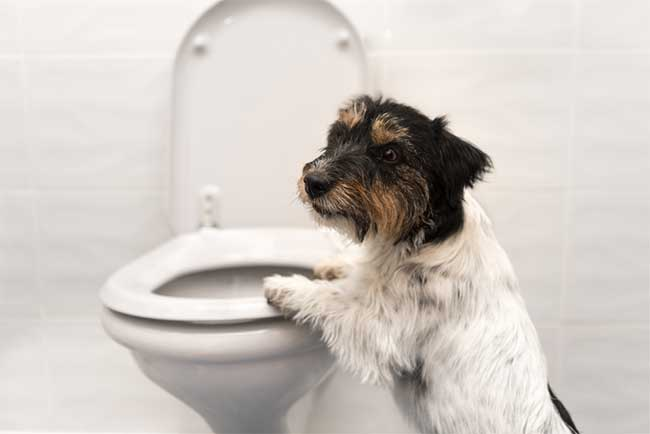 Natural Remedies For Dogs Upset Stomach
