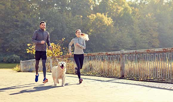 are labs good running partners