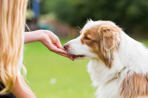 best training treats for dogs